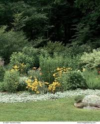 Small Picture Design a Border with Strong Plant Shapes Fine Gardening