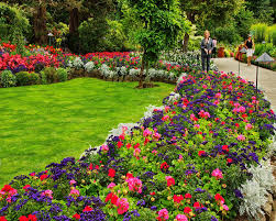 Image result for garden flowers