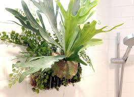 plants filter bathroom