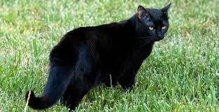 Мачки Images?q=tbn:ANd9GcRkc1AzI-4vh44X1Q9Ihdlnr3_Ct8g1iuhOxtQ_QlWTMB0o-Nl7qQ