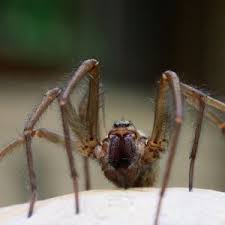 Are Natural Ways to Kill Spiders Effective? | Spider Extermination