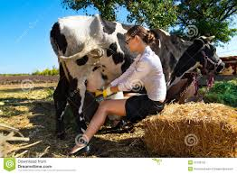 Image result for pic of a women milking a cow
