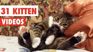 31 <b>Cute Cats</b> | <b>Funny Cat</b> Video Compilation 2017 - YouTube