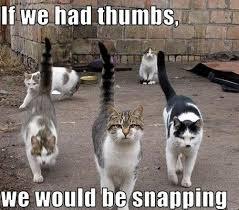 Funniest-cat-memes-of-all-time-4.jpg via Relatably.com