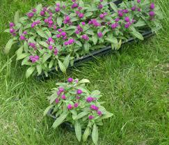 Small Picture Garden Design Garden Design with Pink Princess Weigela Weigela