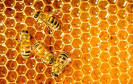 Images & Illustrations of honey