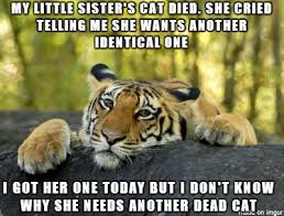 Terrible Tiger is Genius : AdviceAnimals via Relatably.com