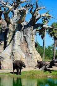 Image result for red wood trees with elephant