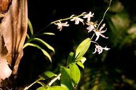 garden lighting enhances color area lighting flower bed