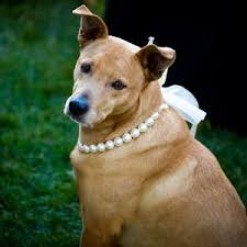 <b>Dog Wedding Outfit</b> Ideas Paw-fect for Your Pup | Wedding Scenery ...