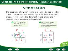 genetics  the science of heredity mendel    s work probability and    genetics  the science of heredity   probability and heredity a punnett square the diagrams show