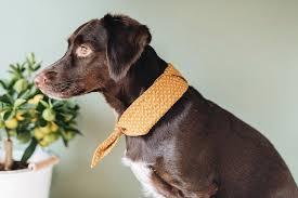 <b>Pet bandana</b>   Pet   <b>Japanese cotton</b>, <b>Dog bandana</b>, Bandana