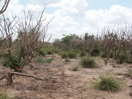 Resultado de imagen para Cambio climático complica fragilidad humanitaria del Sur Global