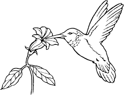 Small Picture hummingbird coloring pages black chinned hummingbird eat nectar
