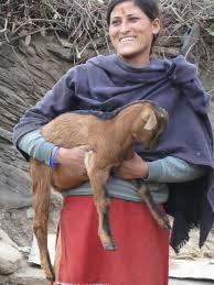 goat keeper getting her master s degree in hindi literatur flickr goat keeper getting her master s degree in hindi literature in s northern state of uttarakhand
