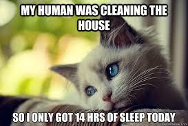 Image result for spring cat memes