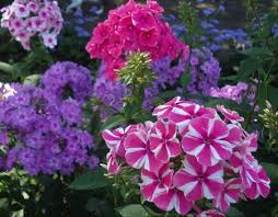 Фитолампы для растений купить в Новосибирске