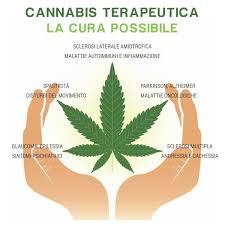 Resultat d'imatges de cannabis terapeutica