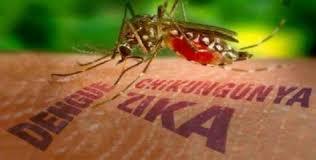 Resultado de imagen de zika cuba