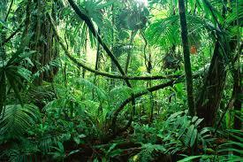 manfaat hutan bagi kehidupan manusia