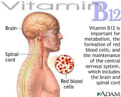Image result for vitamin b12