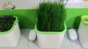 Зелень круглый год! Проращиватель <b>АэроСАД Здоровья КЛАД</b> ...