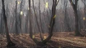 Image result for Hoia-Baciu Forest wiki