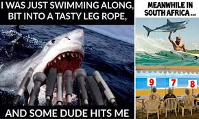 Mick Fanning's escape from shark attack pictured in hilarious ... via Relatably.com