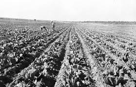 fall harvest in ese american concentration camps densho fall harvest in ese american concentration camps