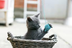 The Potential Dangers of <b>Cat</b> Toys | Animal Planet