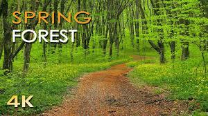 4K <b>Spring Forest</b> - Blackbird Song - Bird Singing/ Chirping - Ultra HD ...
