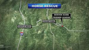abused neglected horses now have new rescue shelter cbs denver horse rescue map abused neglected horses now have new rescue shelter