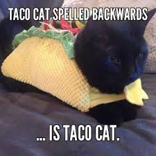 TACO CAT SPELLED BACKWARDS ... IS TACO CAT. - Meme Something ... via Relatably.com