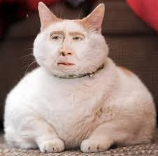 Unwilling Meme Nicolas Cage Says He's 'Not In the Social Media ... via Relatably.com
