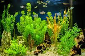 10 аквариумных <b>растений</b> с минимальным уходом: виды ...