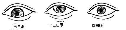 「三白眼、四白眼」の画像検索結果