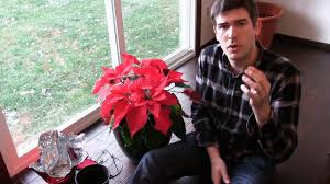 How to Grow Poinsettia Year Round - Complete Growing Guide ...
