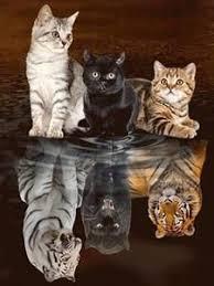 <b>Diamond</b> Painting Cat <b>Diamond</b> Embroidery Tiger <b>5D DIY Diamond</b> ...