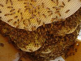 Image result for beehive