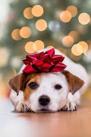 Image result for doggie christmas donations