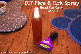 tough interview questions new grad nurse group exotic pet animal diy flea tick spray for cats natural flea tick prevention