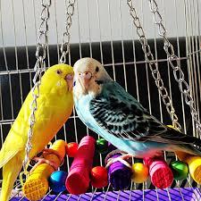 <b>5 Pcs Pet</b> Products <b>Bird</b> Toys Wood Hanging <b>Parrot</b> Healthy Bite ...