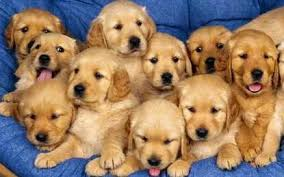 Image result for CACHORRITOS EN VENTA