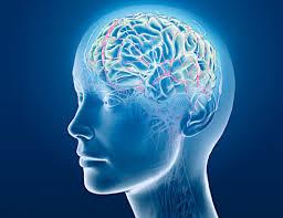 Image result for brilliant brain
