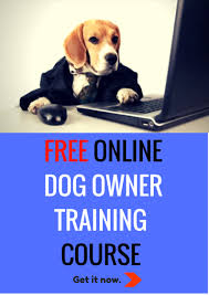 online courses jonah s ark doggie centre in north vancouver advertisement