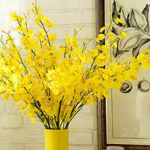 Oncidium reviews – Online shopping and reviews for Oncidium on ...