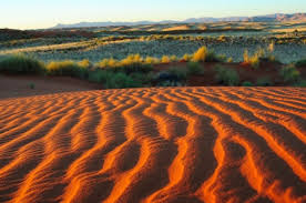 Image result for kalahari desert