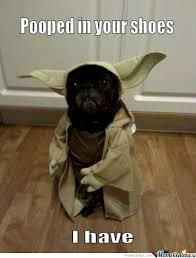 Yoda Dog Memes. Best Collection of Funny Yoda Dog Pictures via Relatably.com