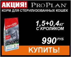 Ван кэт <b>наполнитель</b> для туалета в СПб по выгодной цене. <b>Van Cat</b>