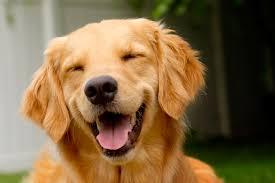 Resultado de imagem para cachorro fotos